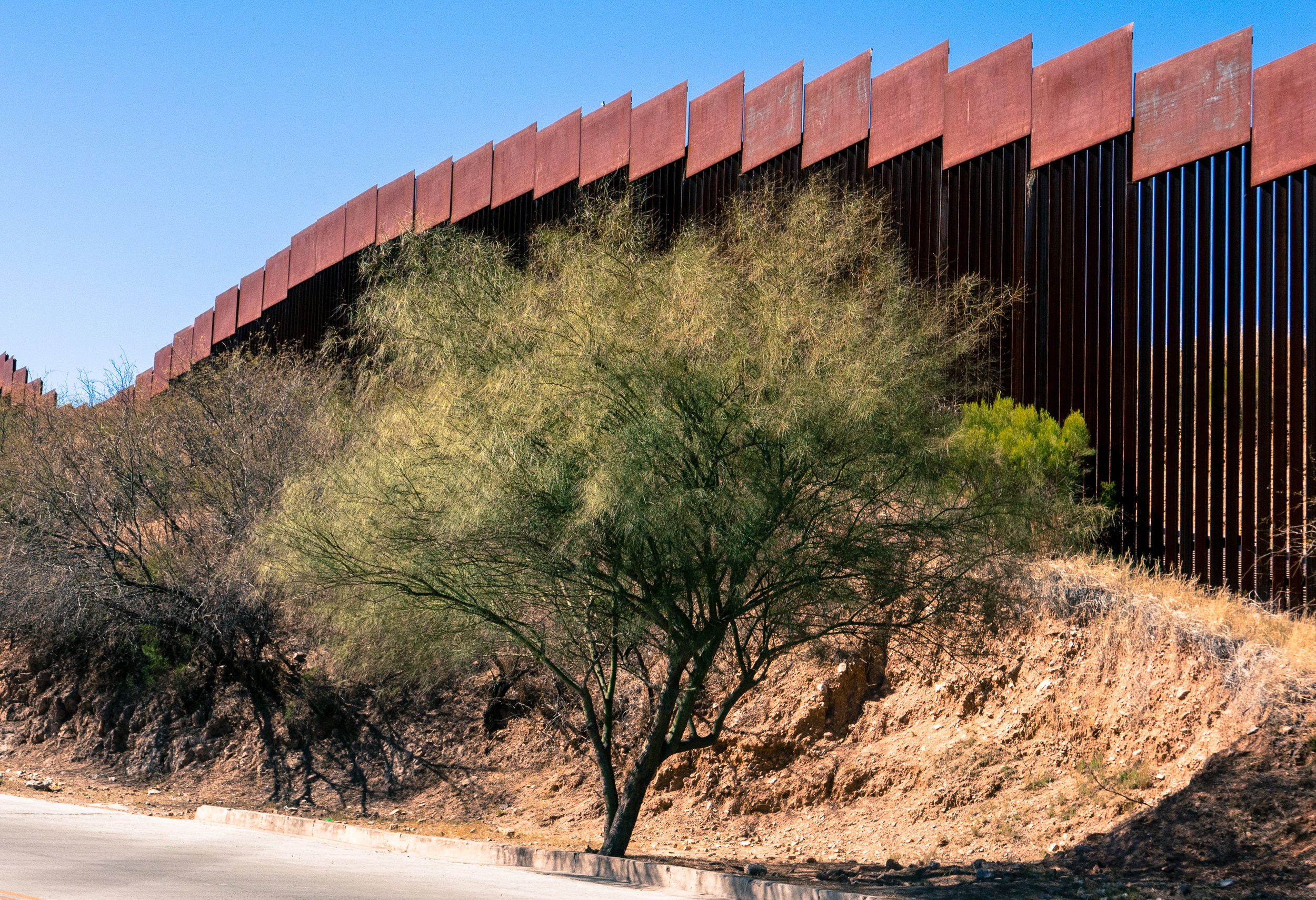 Keeping America safe from the palo verde?