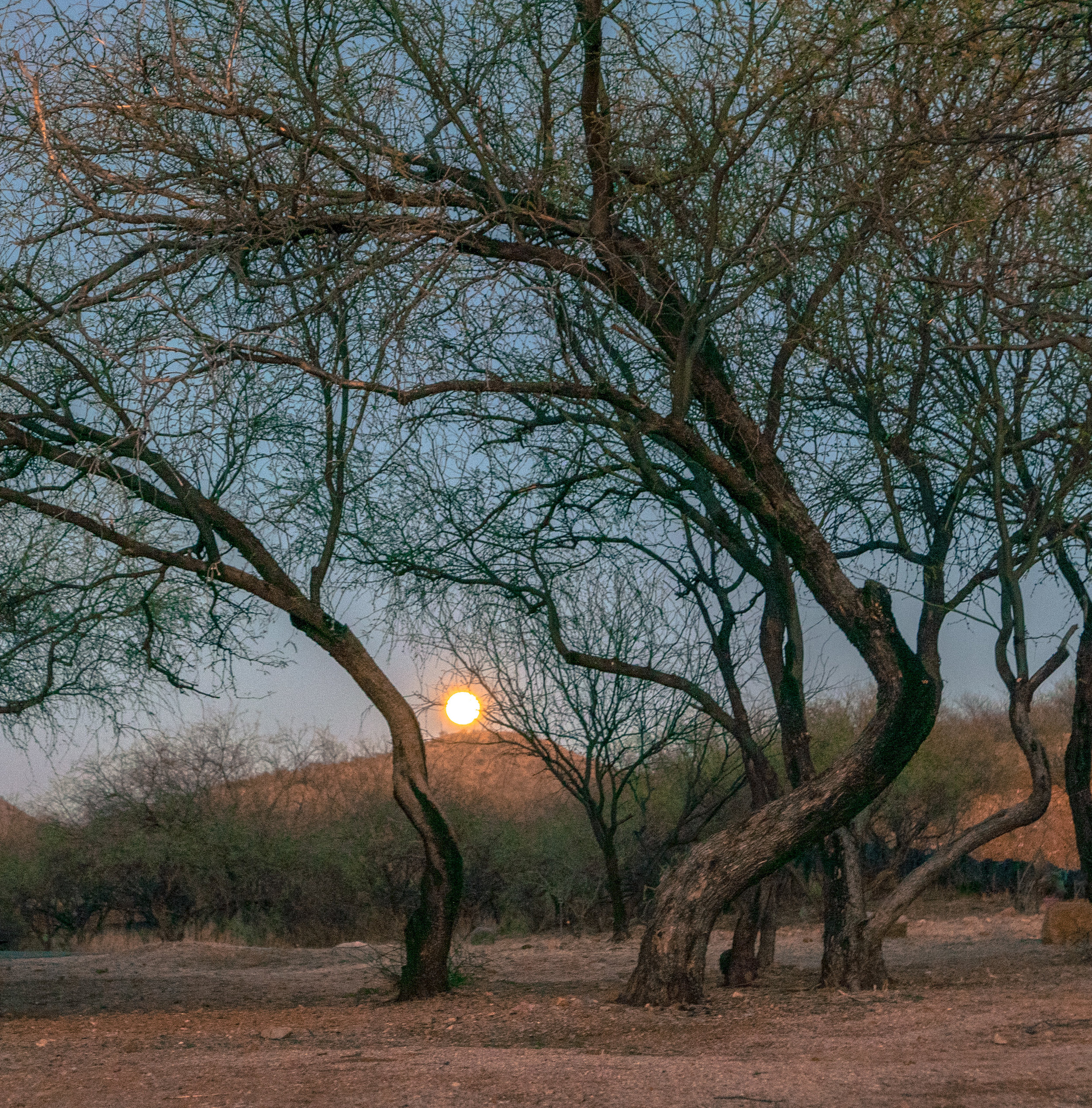 Ending with a moonrise at Patagonia State Park, Oro Valley, Arizona.