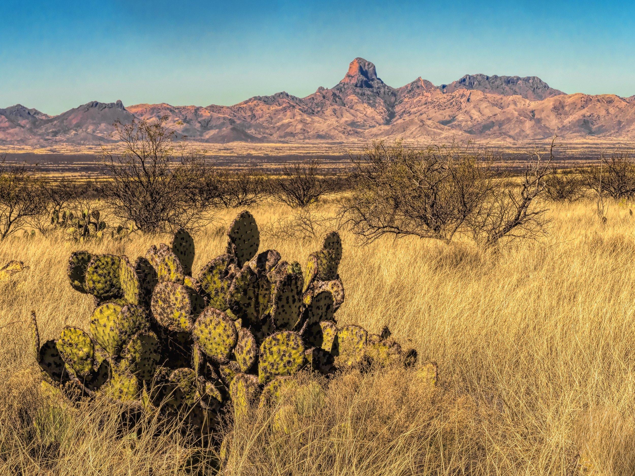 Big grasslands at Buenos Aries National Wildlife Area, Arizona.