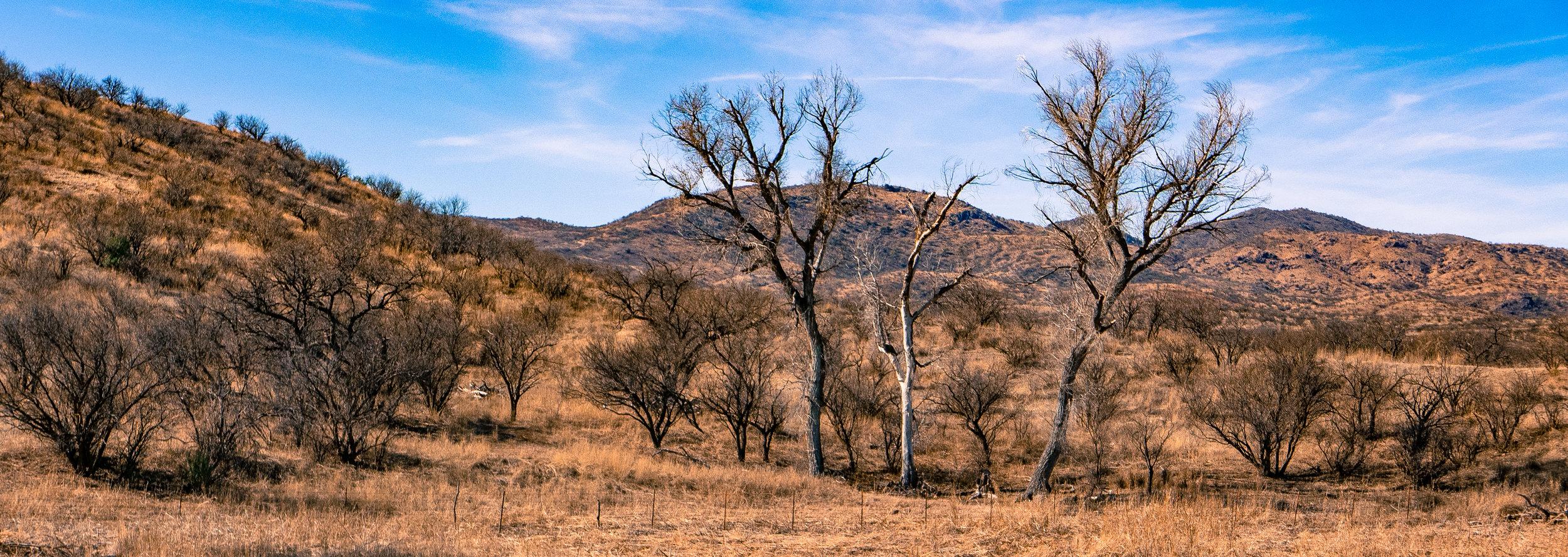Winter grasslands make a wide open landscape in Arizona.