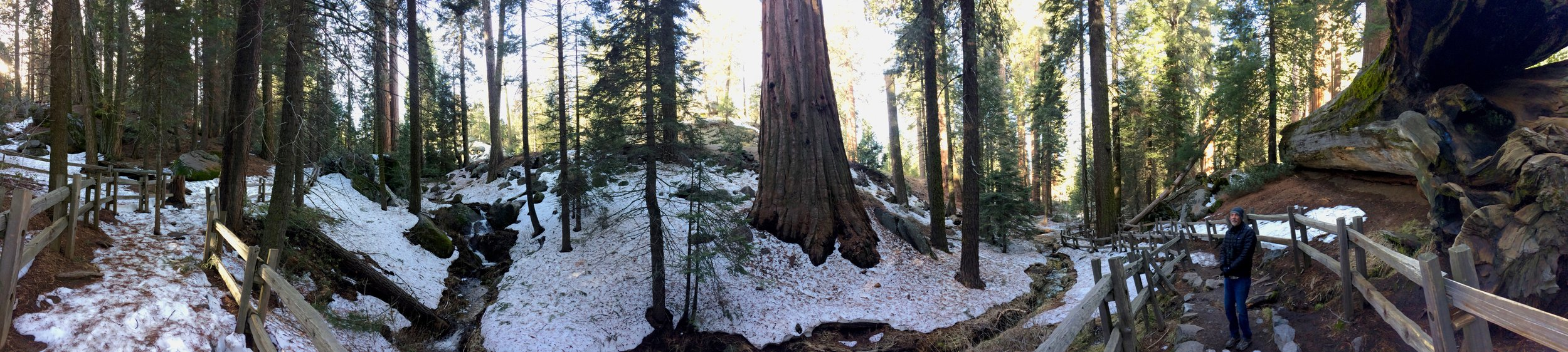 Giant sequoia trees (and my Park Passport Partner) in Grant Grove, Kings Canyon National Park. Passport stamp number 2.