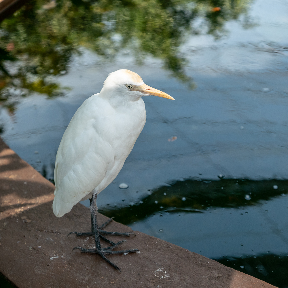 "Not an egret in the wild. ""Do you know you are living in a cage?"""