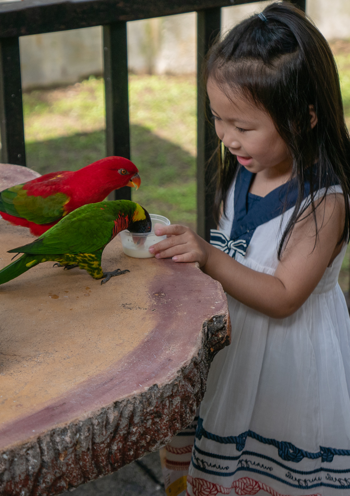 Children and big-time birders like feeding the lories.