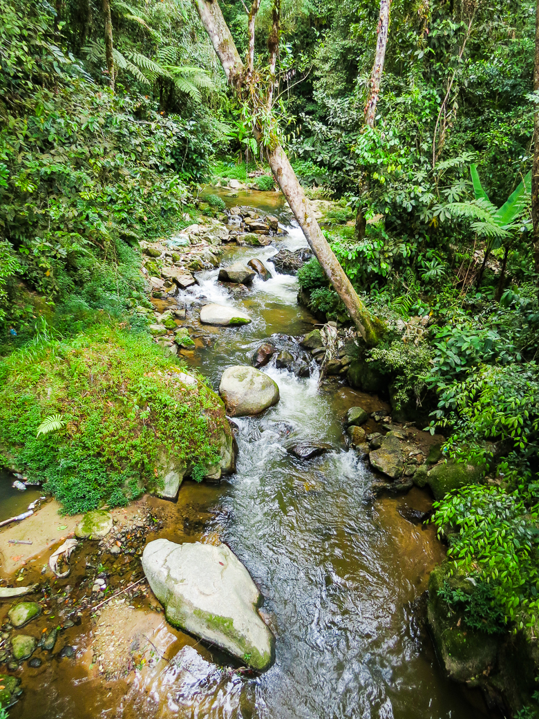 We hiked along a small jungle stream and listened to the noises of the natural landscape.