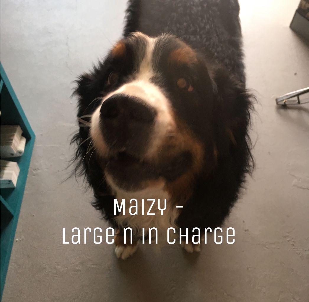 Maizy_Large.jpg