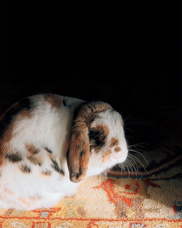 beam #bunny #rabbit #light #vsco