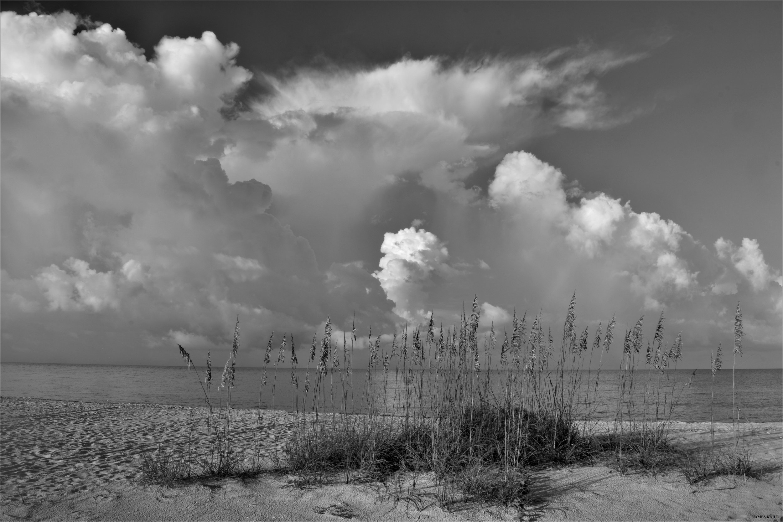 Sanibel Island. Florida in Black and White
