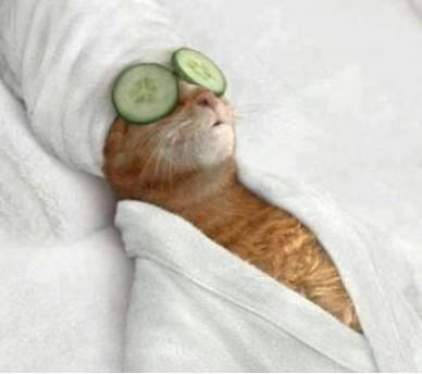spa-kitty1-e1370005848707.jpg