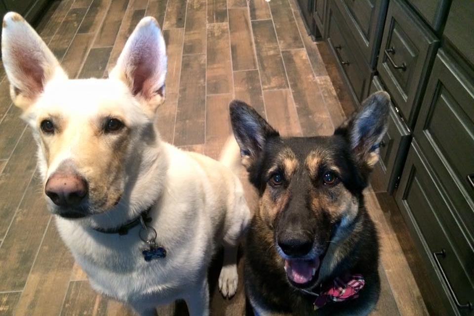 Midwife Teri's fur babies: Buddy and Kylee