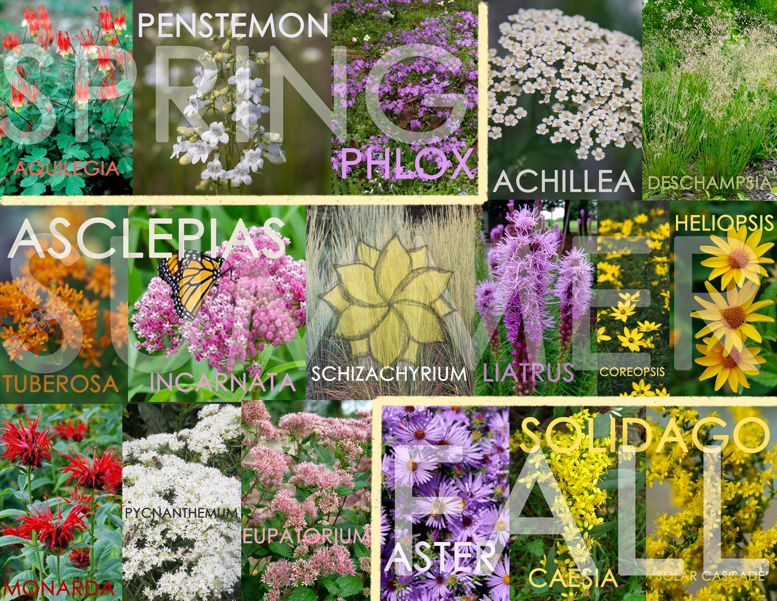 5-Burbank-Wildflower-Collage-GABD-COMPASS-WATERMARK.jpg
