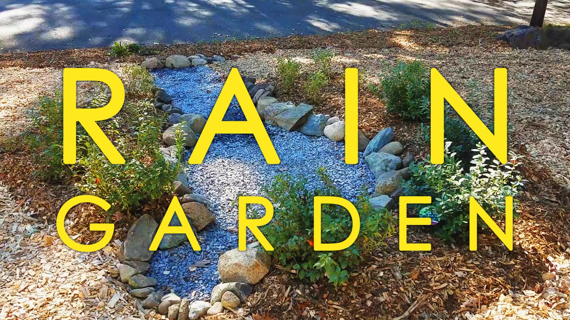 Rain Garden Portfolio