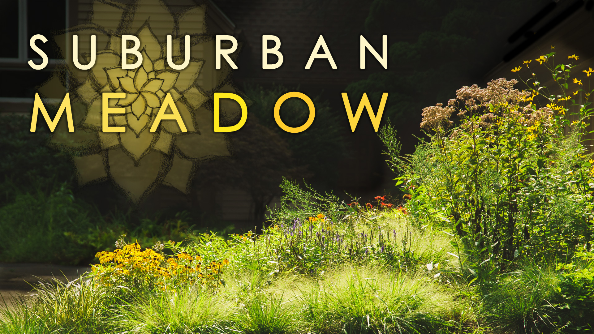 Future Presentations - Suburban Meadow will focus on bringing meadows into the suburban landscape and how to design and create beautiful, natural, and functionally important gardens for our pollinators.Available late 2019/early 2020.