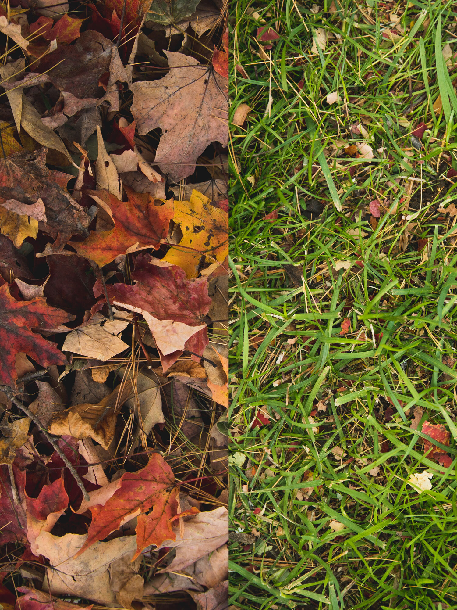 Save the Waste - Green Abundance offers an alternative to your standard fall clean up.Green Abundance recycles your leaves back into the landscape as a fine mulch. This removes their smothering characteristics and allows them to fertilize your existing lawn and gardens.By mulching leaves we speed up nature's process of cycling nutrients to help sustain the health of your garden's plants and the microbiology of the soil.
