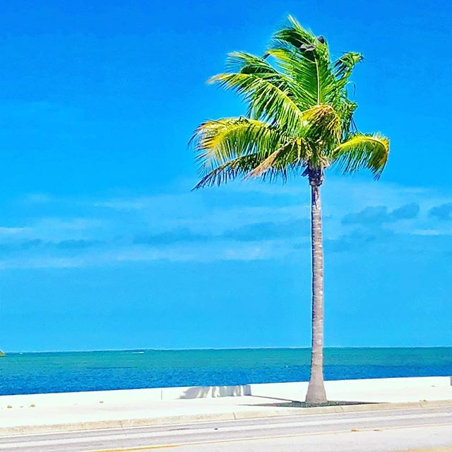 Prettiest view I've ever seen from a tire shop waiting room. #keywestlife #keywest #keywestflorida #palmtree #islandlife