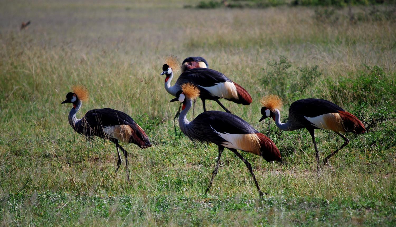 DSC_05330653+-+Uganda+2008.9+-+.JPG