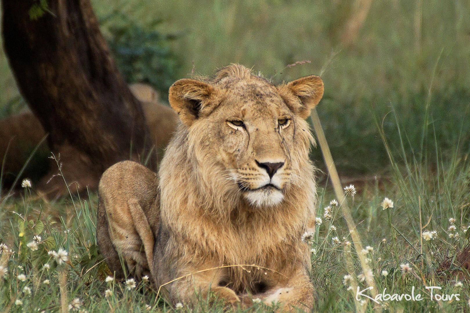 Kidepo Valley National Park    Kidepo ist Ugandas isoliertester Nationalpark aber die wenigen, die die lange Reise in den Norden durch die wilde Grenzregion von Karamoja auf sich nehmen, können auf eine Belohnung hoffen. Von Apoka, im Herzen des Parks, erstreckt sich die Savannenlandschaft bis zum Horizont zu entfernen Gebirgen. Touren nach Kidepo werden individuell für dich erstellt. Schreibe uns über das Buchungsformular und erzähl uns alles über deine Ideen und Wünsche und wir lassen sie wahr werden.