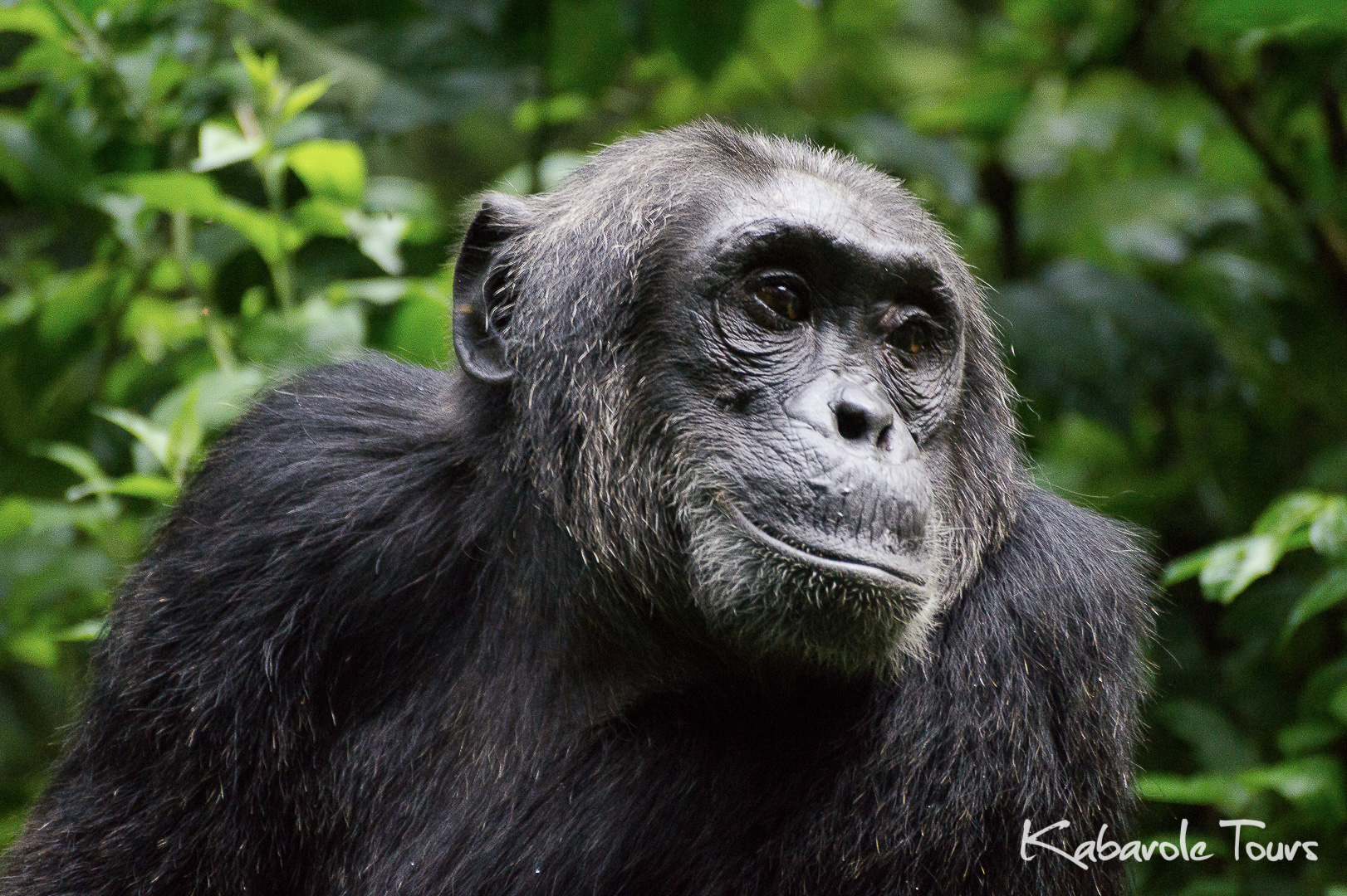 Chimp Tracking and Bigodi Nature Walk
