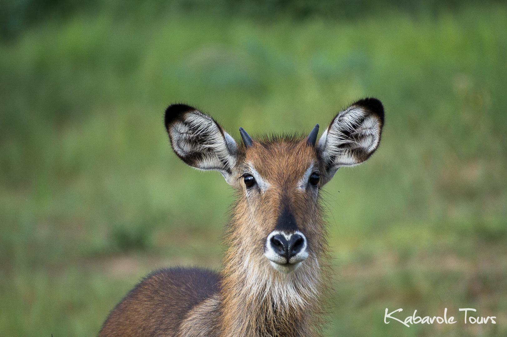 Murchison Falls National Park (2 Days)
