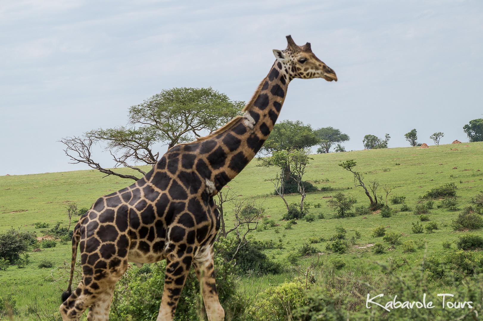 Murchison Falls National Park (3 Days)