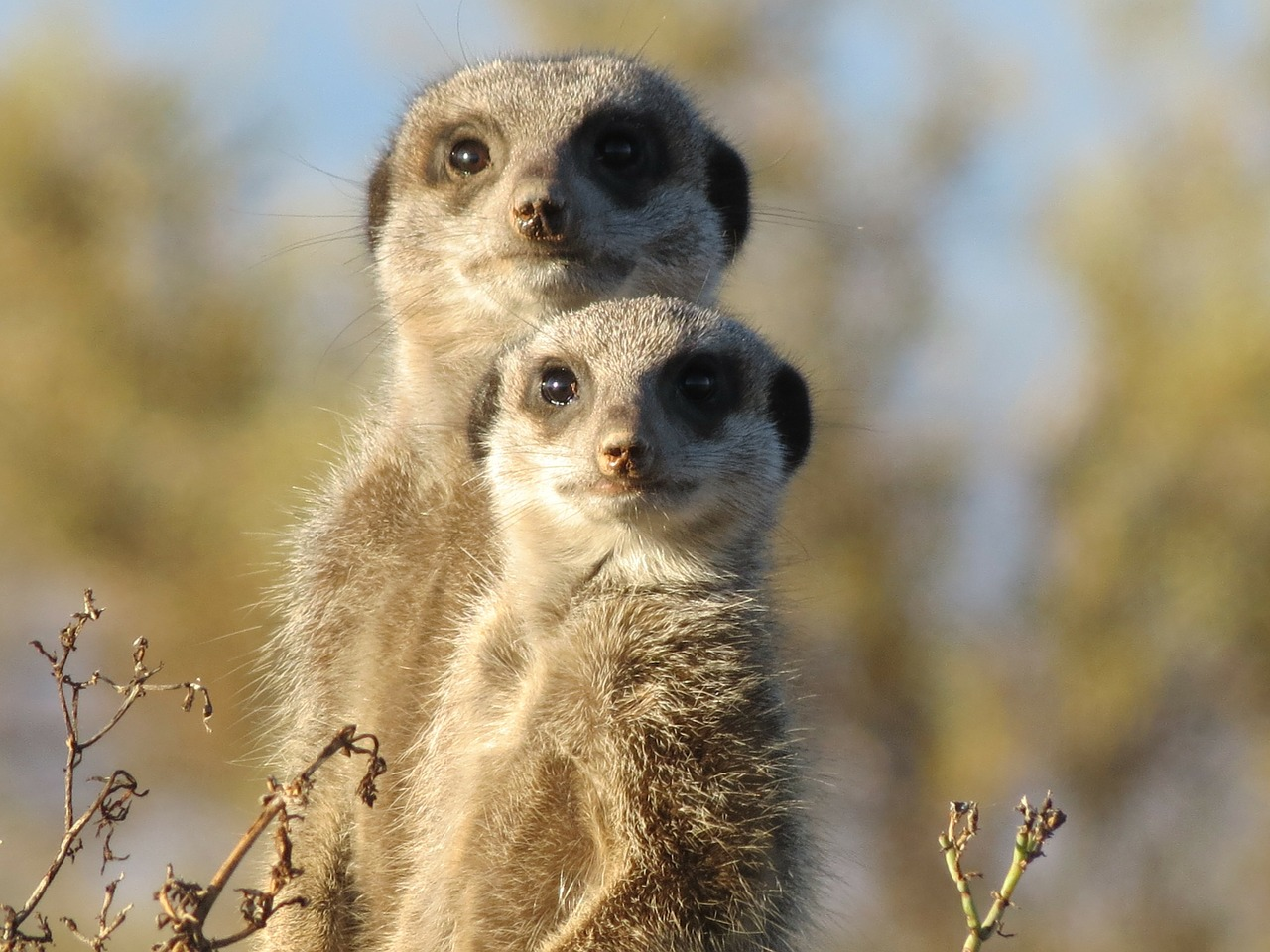 Our previous image was apparently offensive to at least one reader who took issue with the use of the face of Che Guevara. Instead, please enjoy these creepy meerkats staring at you, which work pretty well, too...
