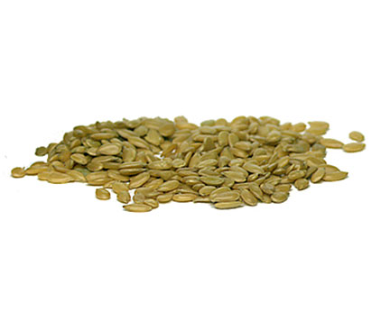 Graines de lin Gold LE BOURGEON BIO: 250 g, 500 g