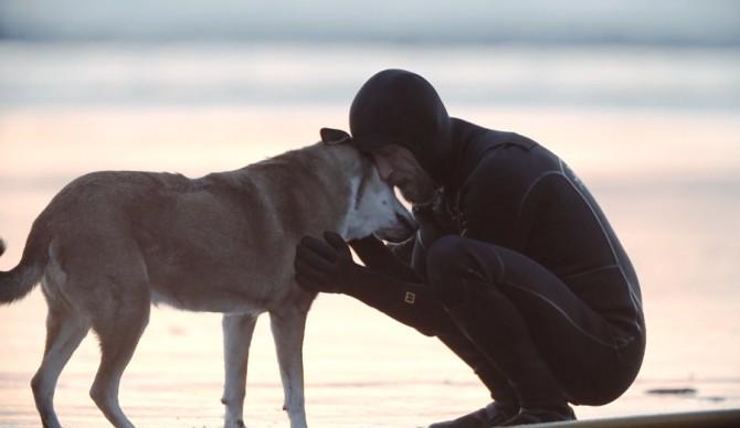 Dog-2-670x388.jpg