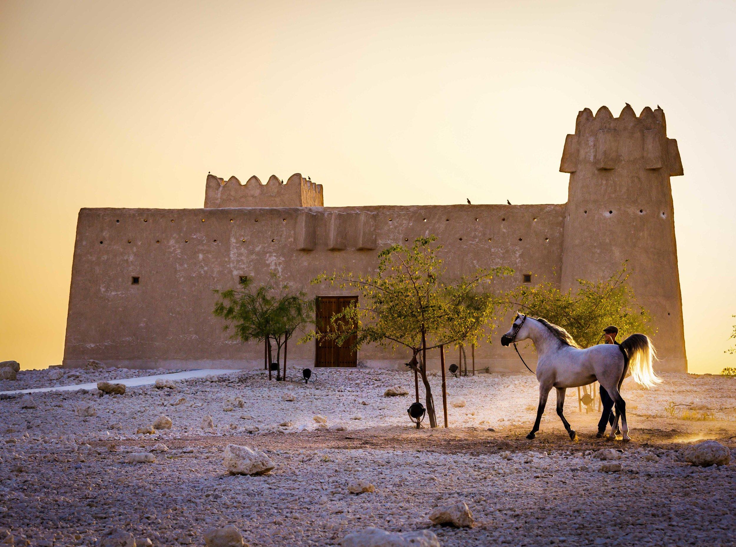 The Arabian Horse Photography