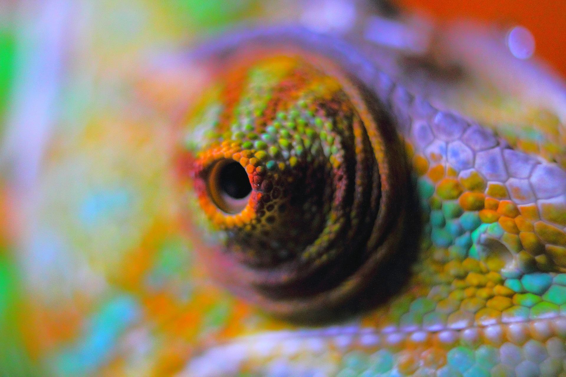 chameleon-abstract-378557_1920.jpg