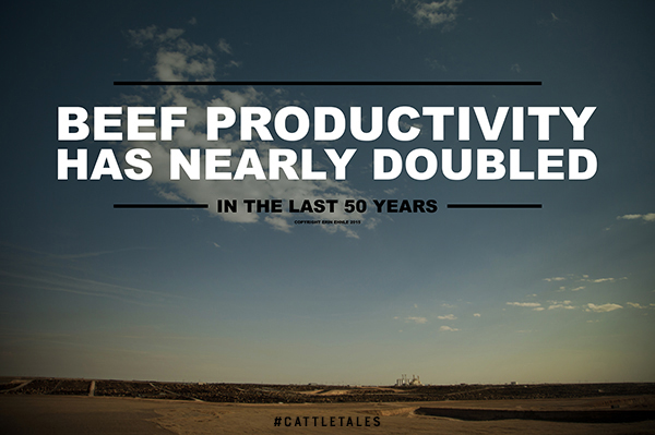 Beef Productivity Image by Erin Ehnle