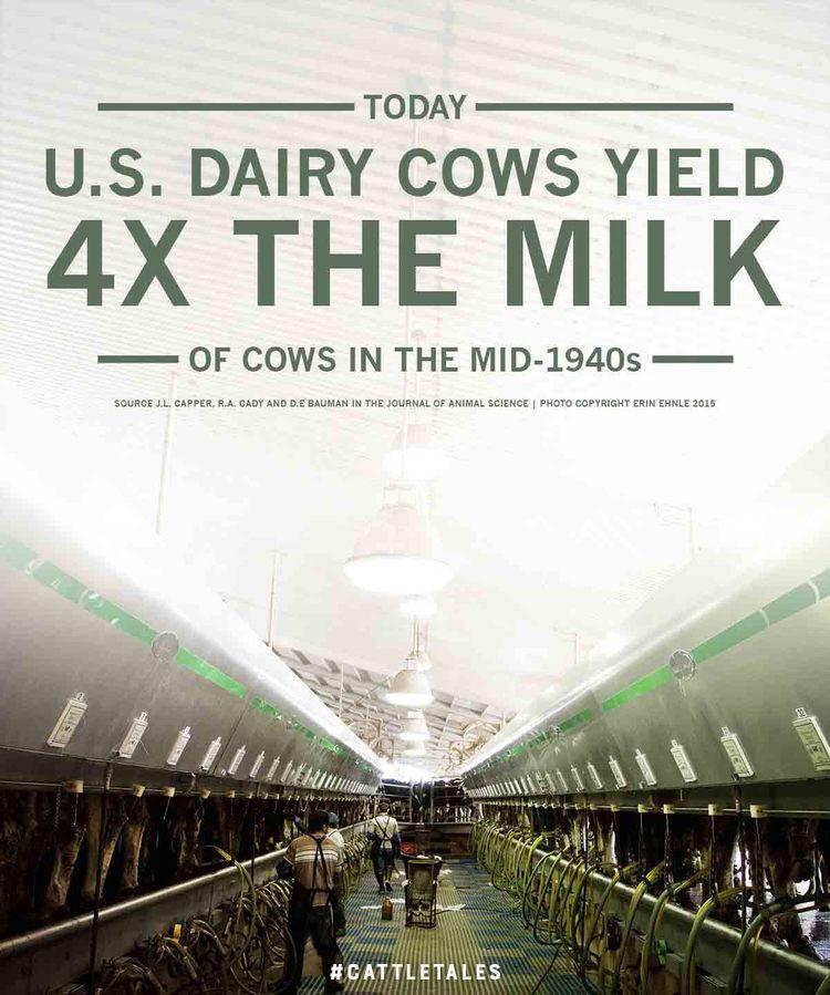 Milk by Erin Ehnle