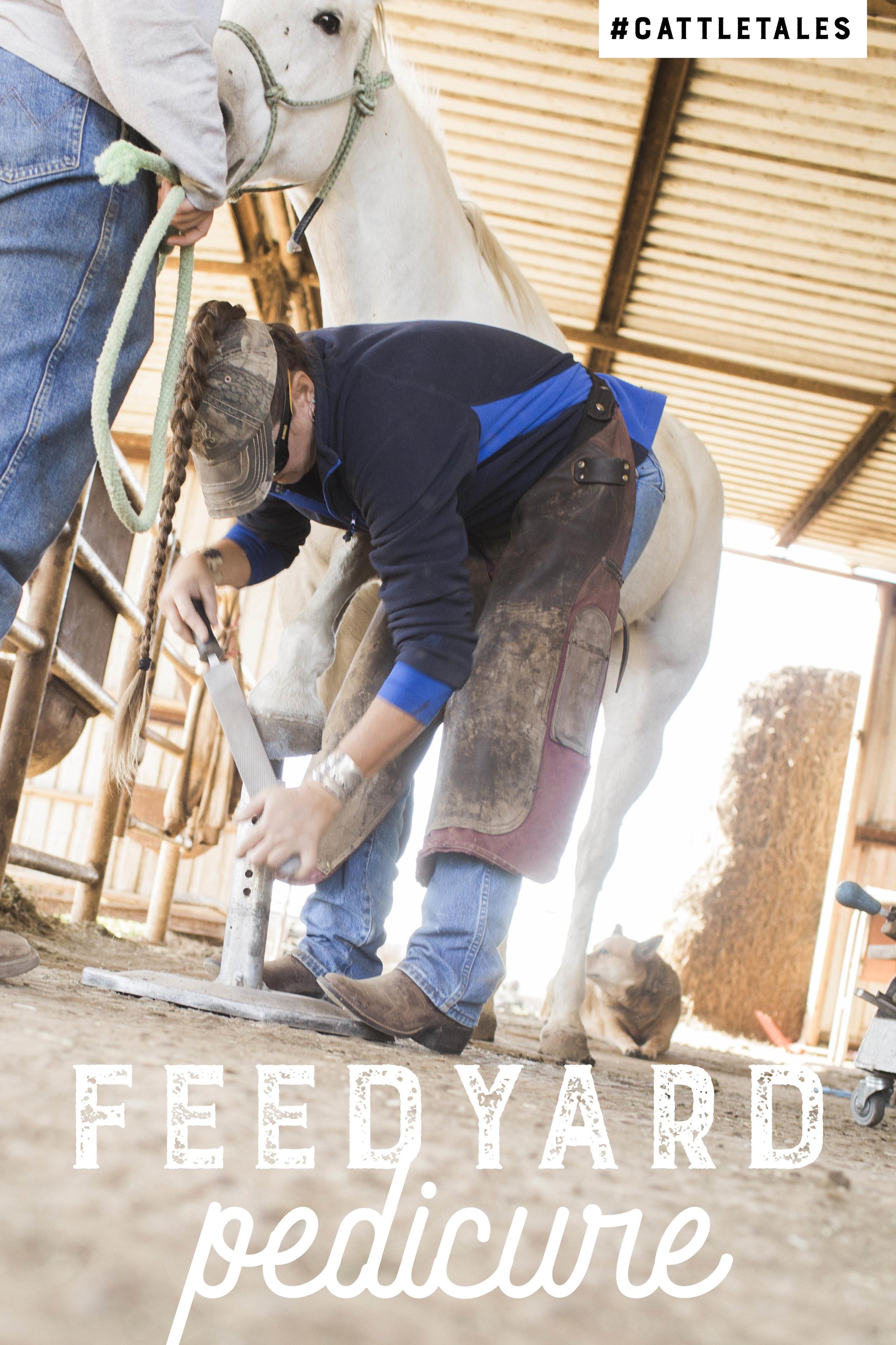 feedyard pedicure.jpg