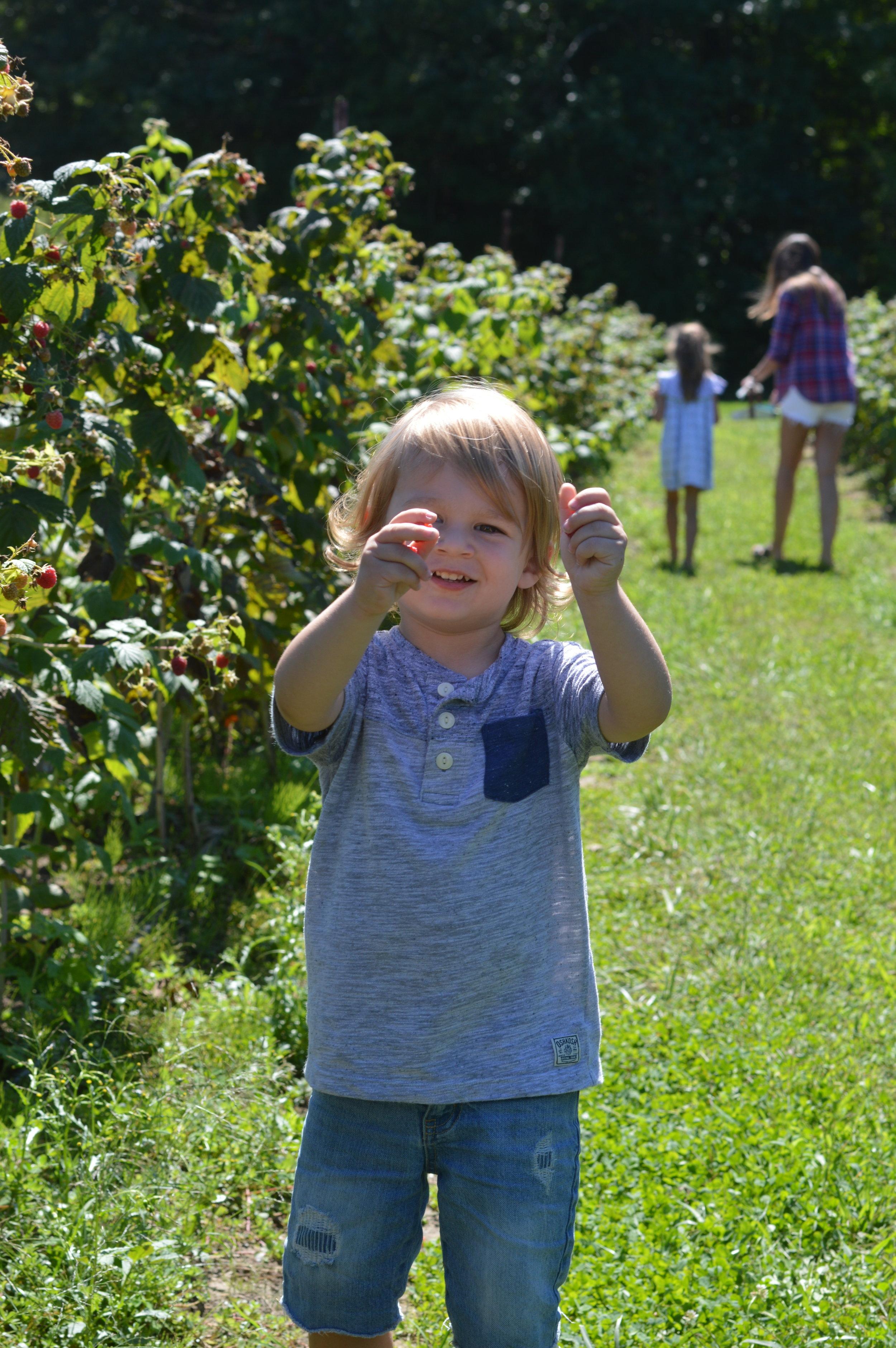 toddler berry picking