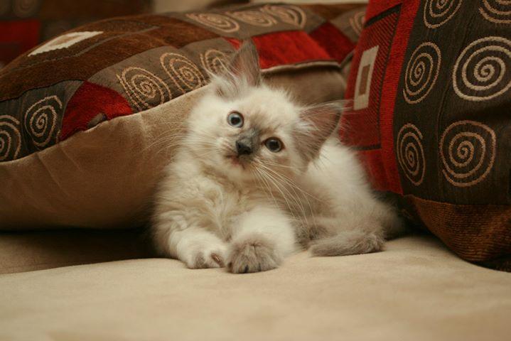Pearl - such a cute kitty