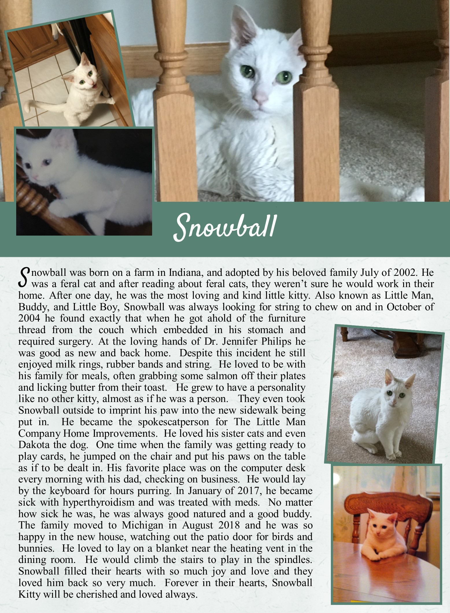 Snowball's Life Tail