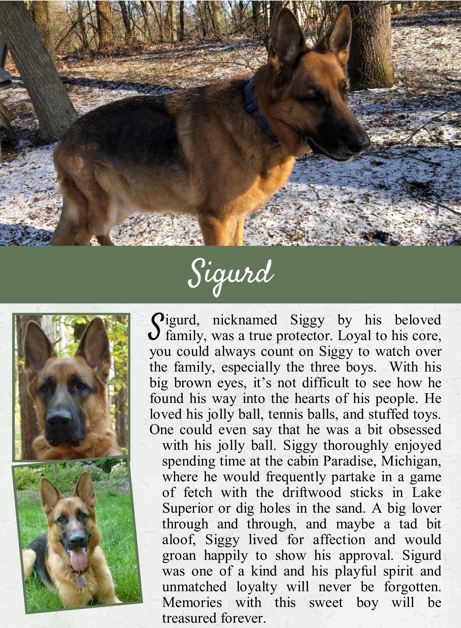 Sigurd's Life Tail