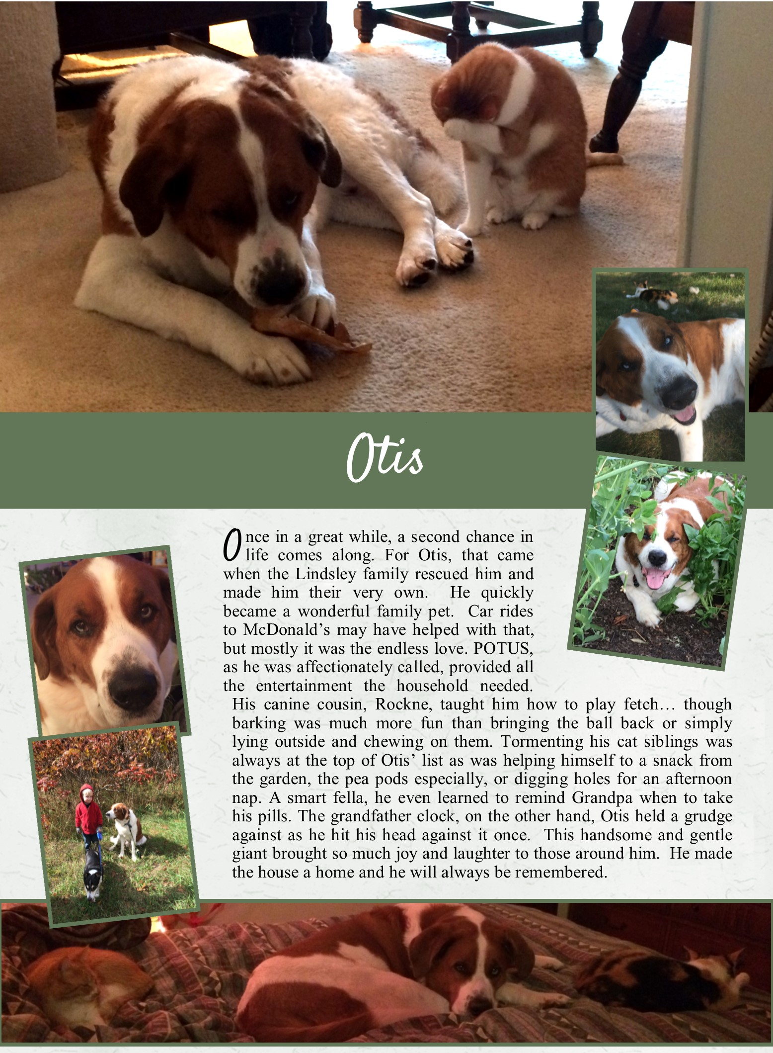 Otis' Life Tail