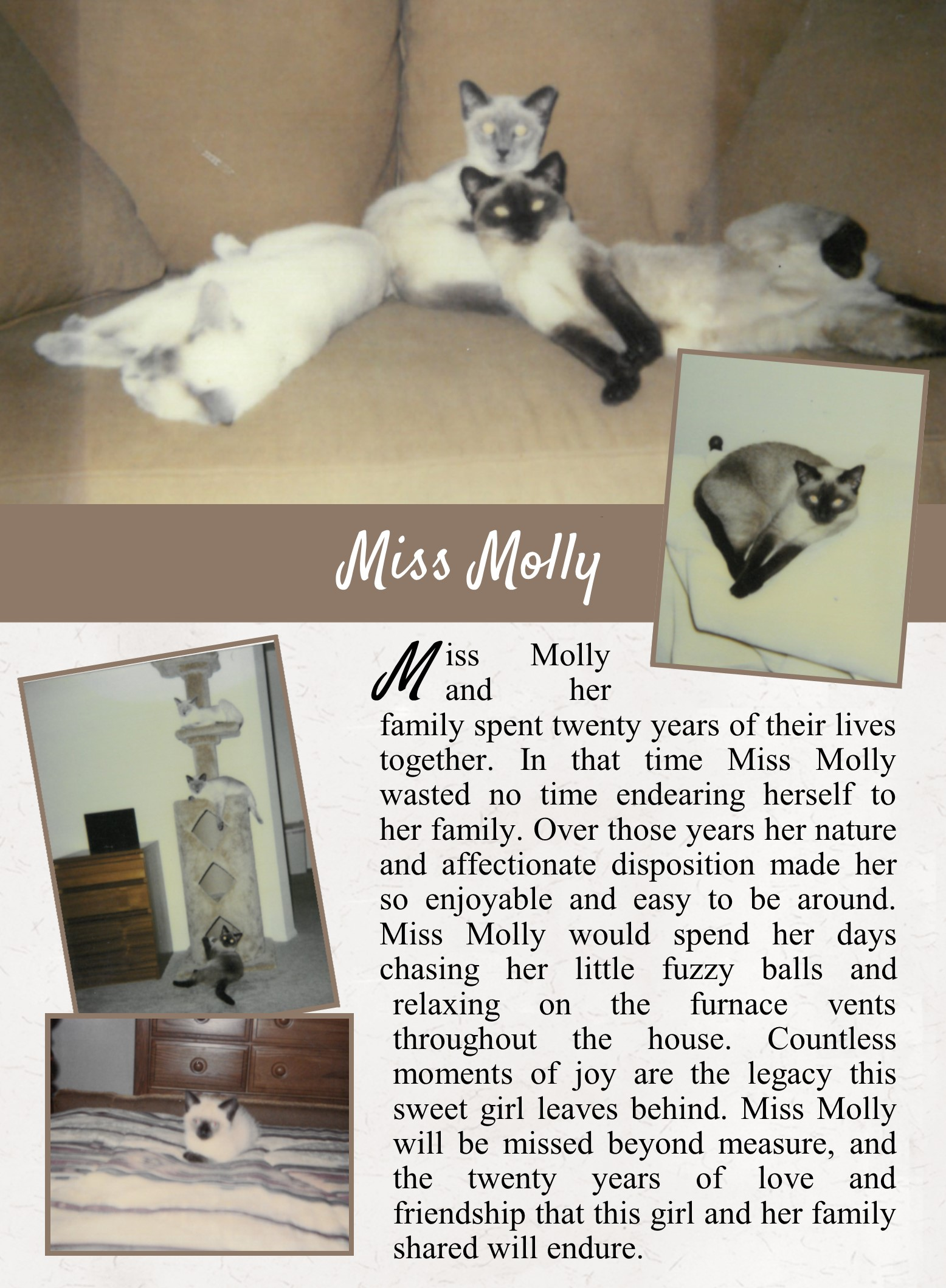 Miss Molly's Life Tail