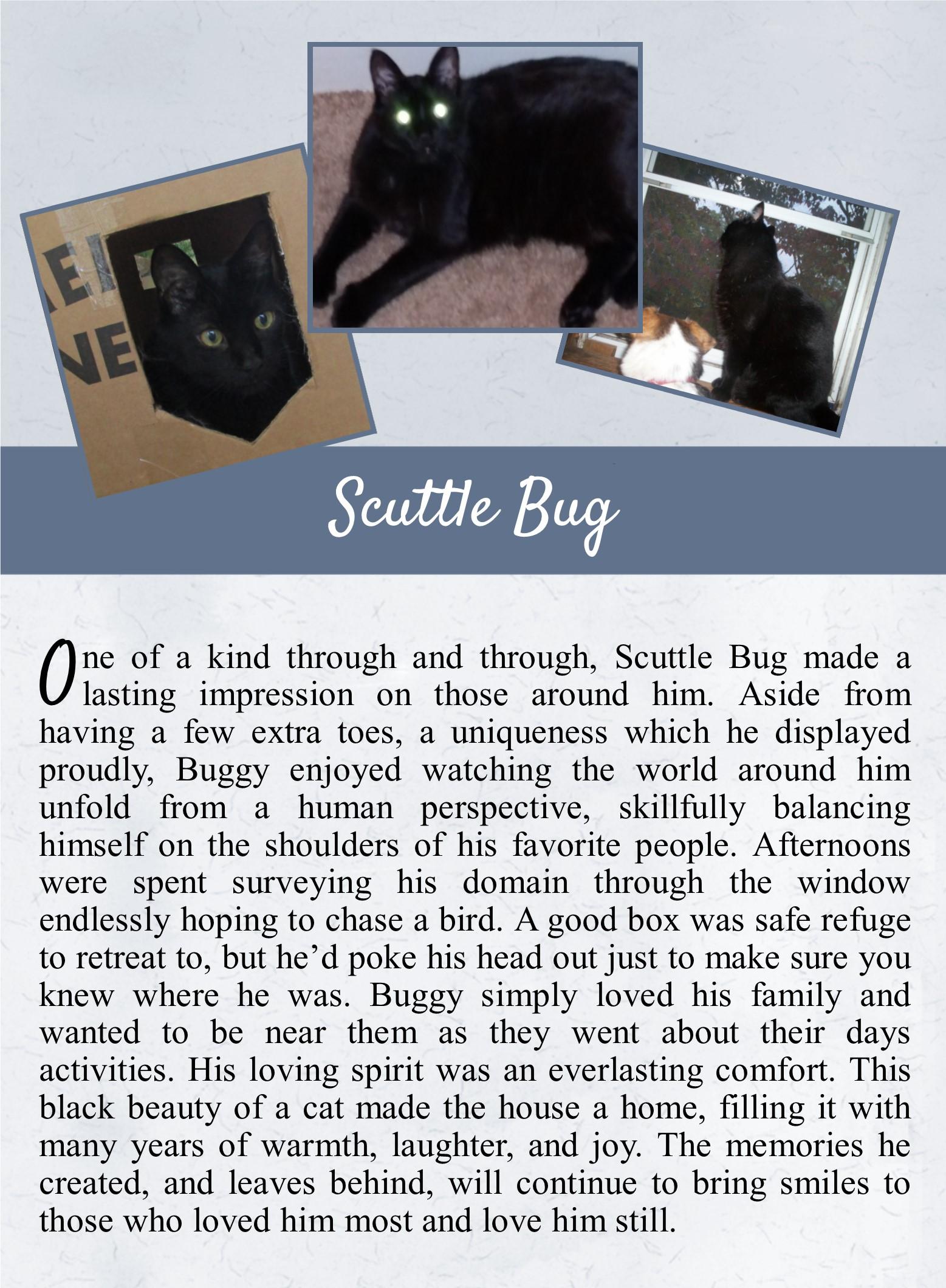 Scuttle Bug - Life Tail.jpg