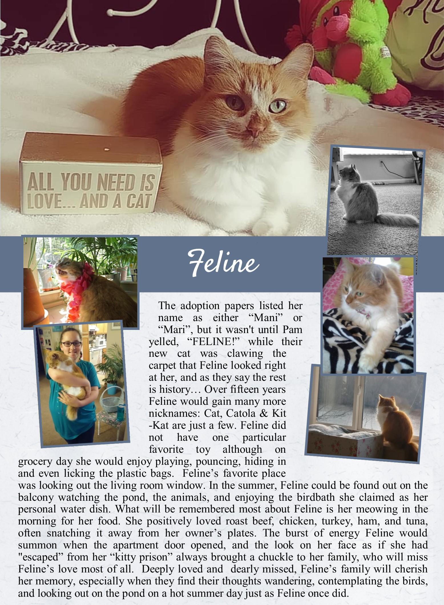 Feline's Life Tail