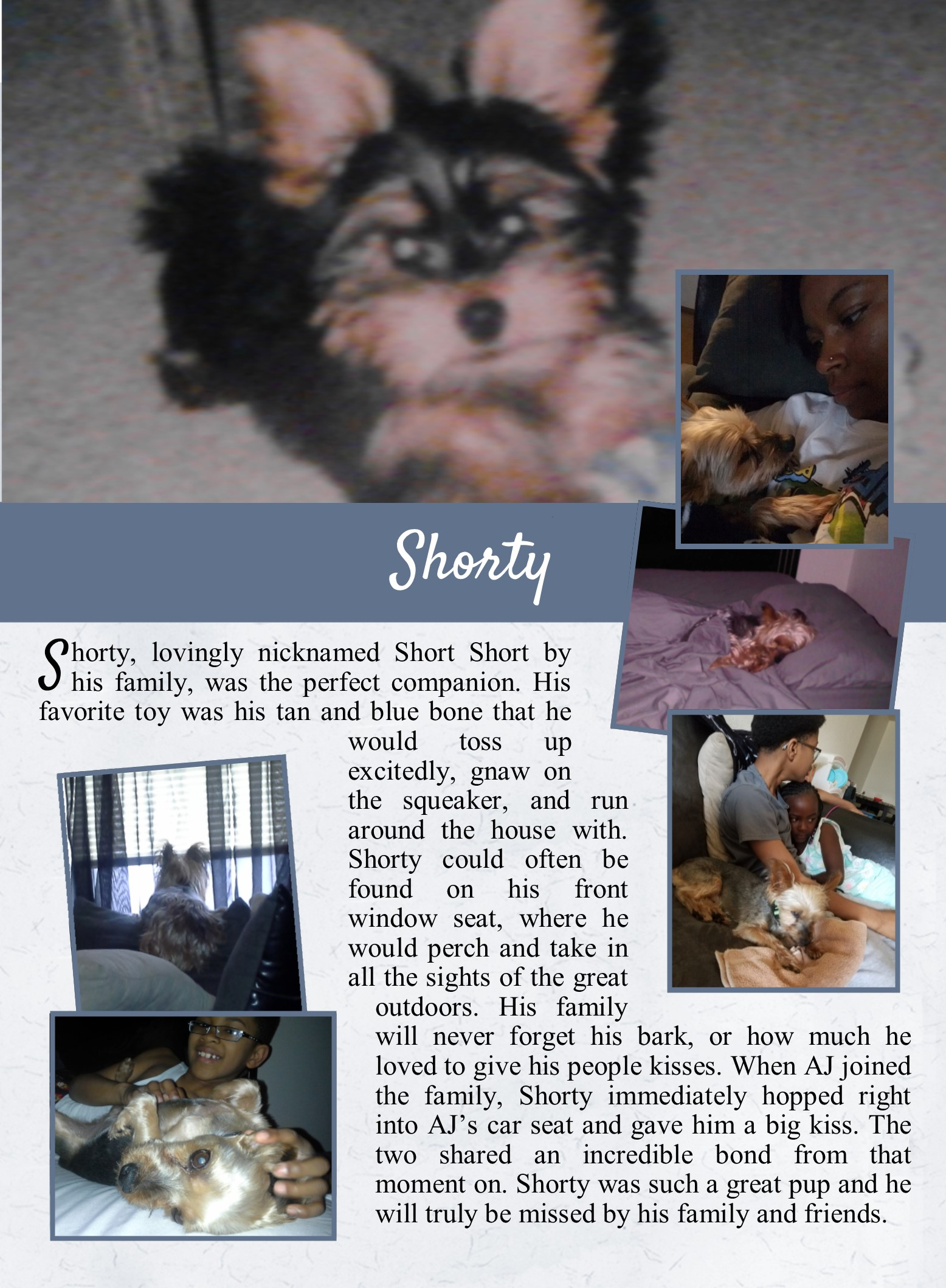 Shorty's Life Tail