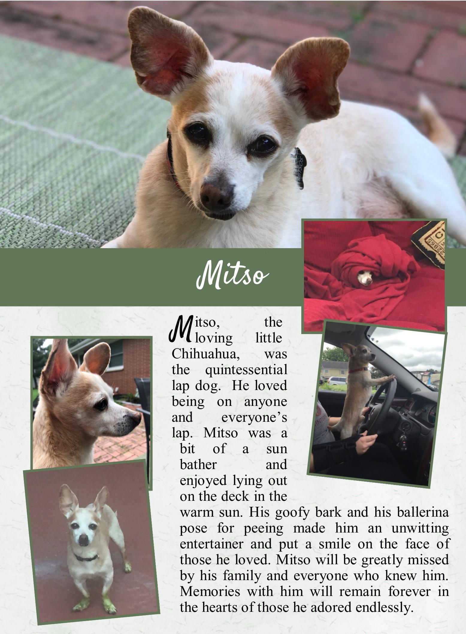 Mitso's Life Tail