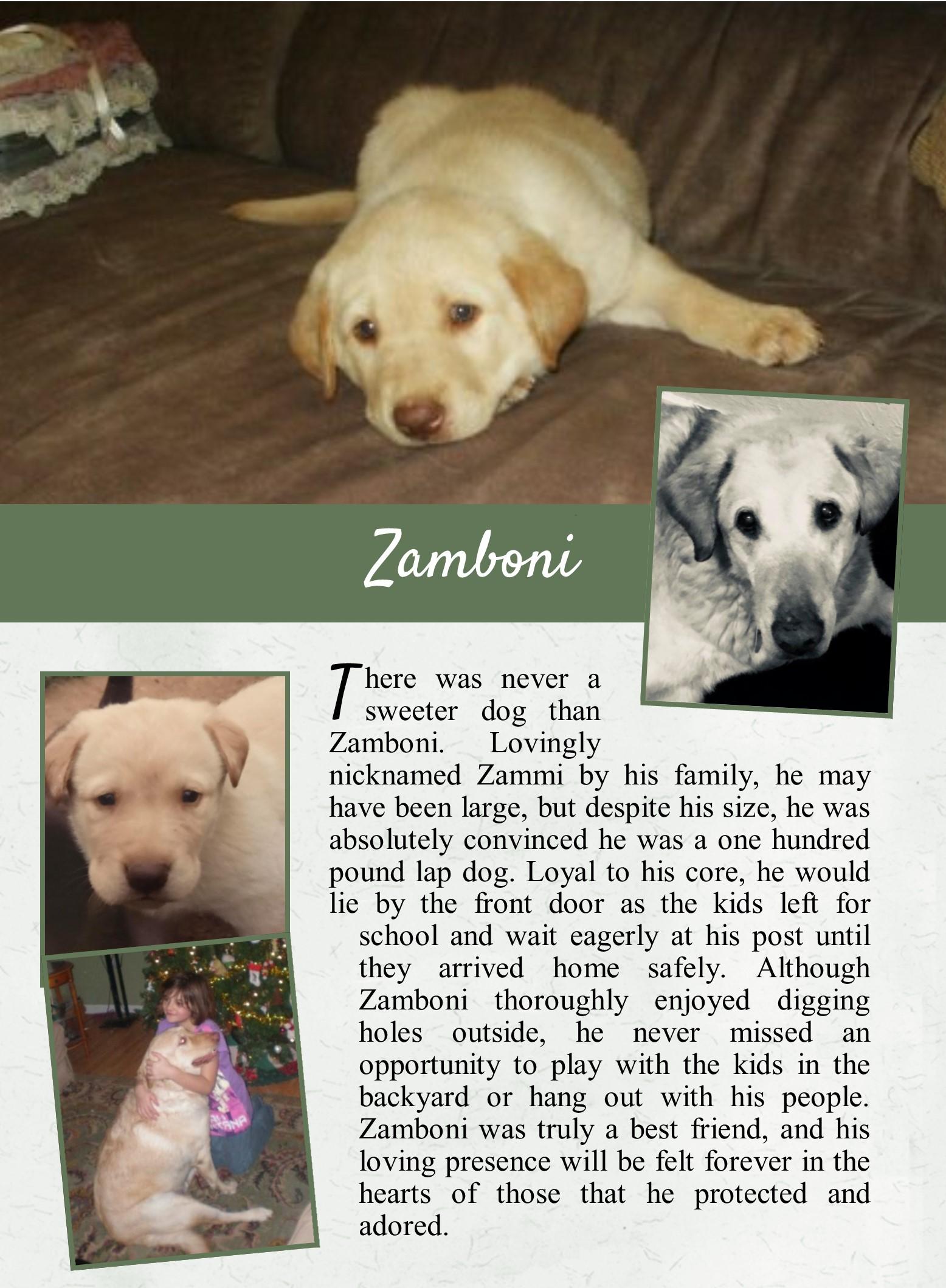 Zamboni's Life Tail