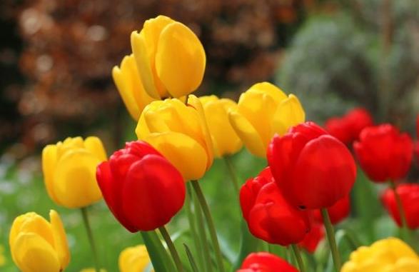 tulipe2.jpg
