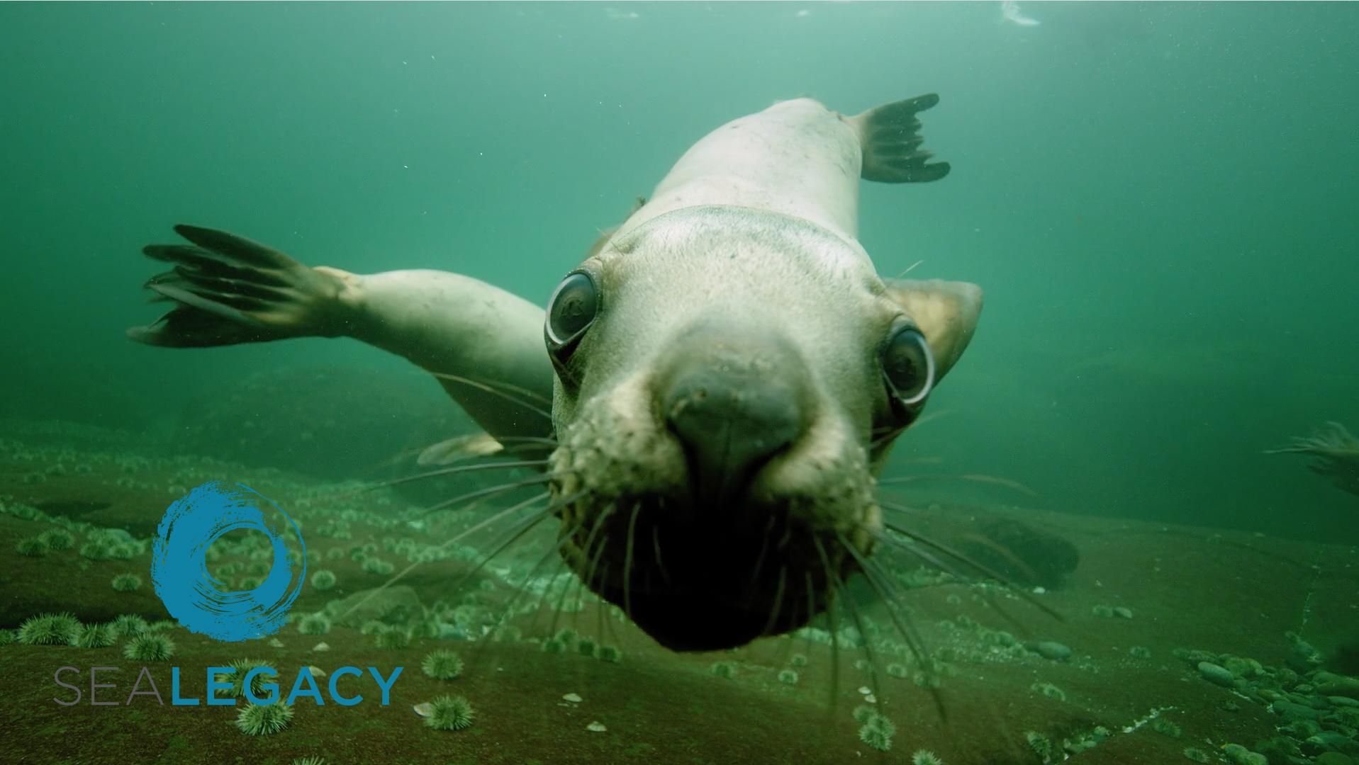 """SeaLegacy - """"The Salish Sea: A Legacy Moment"""""""