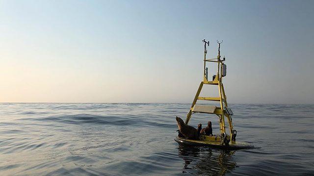 Offshore hangs.