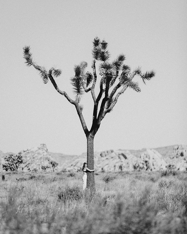 """""""act natural"""" / love me some joshua trees so much i either want to hug one or be one 🌿"""
