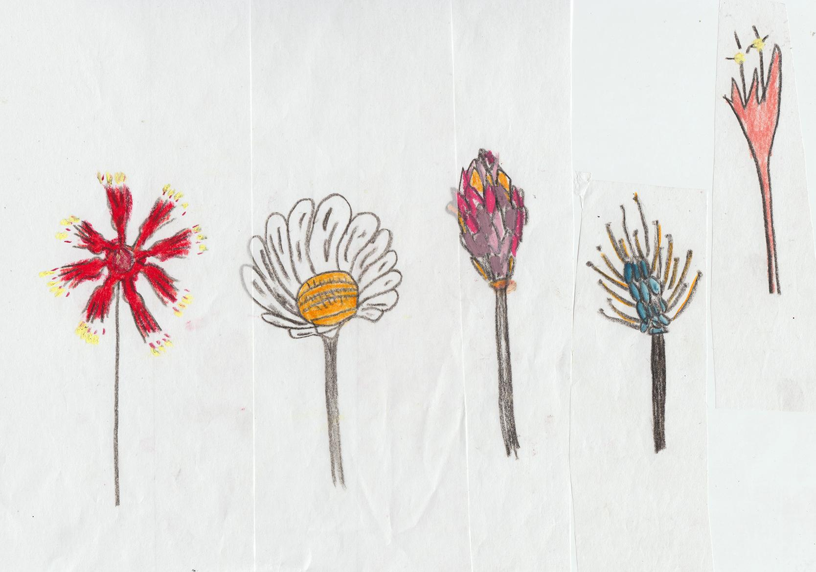 flowersketches.jpg