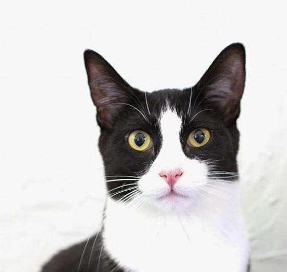 Fancy Pickles: Studio Cat