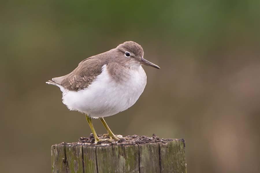 2012-0212_Unidentified_Bird-115A.jpg