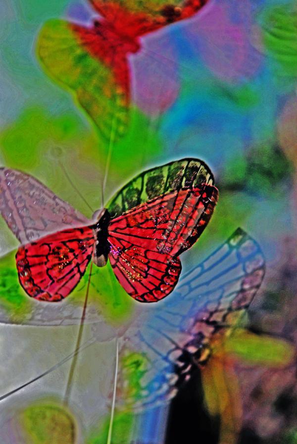 Butterflies on Porch